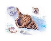 sea beach summer, sink, shell, conch, cockleshell, hole, blister