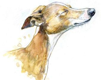 Italian greyhound bliss! Catching some rays! Merlin enjoying the sun!