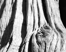 Black and white tree photography: gnarled bark knothole, natural texture, vertical lines wood grain, zen art, cottage chic Mothers Day gift.