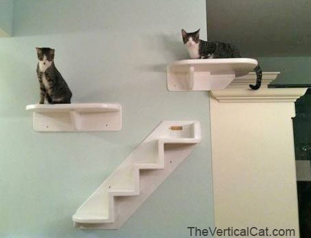 Wrap Around Corner Cat Shelf From The Vertical By