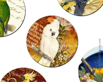 Digital Collage Sheet  Parrots 1 inch round images Scrapbooking Pendants Printable Original  Vintage 4x6 inch sheet  102