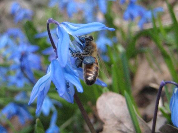 Similiar Fragrant Plants List Keywords