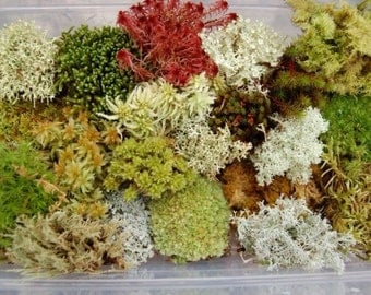 Fresh Live Moss Variety Pack!