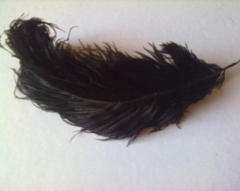 1 purchased lot = 1 free! Old ostrich feathers