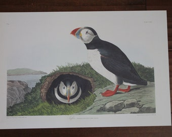 Puffin John James Audubon Art Plate CCXIII to Frame or for Collage, Scrapbooking, Paper Arts, Assemblage and MORE