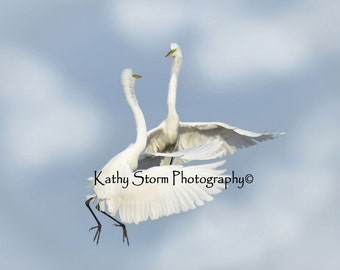 Fine art wildlife photography.   Great Egrets, Four in a series of six.  Wedding or Anniversary Gift,  Wall art, home décor.  FREE SHIPPING!