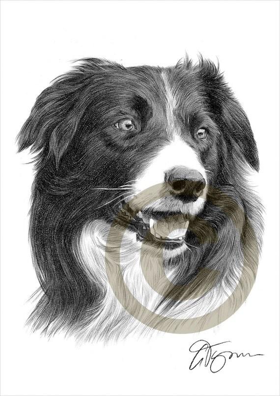 Matita di border collie cane disegno opera di formato a4 for Disegni a matita di cani