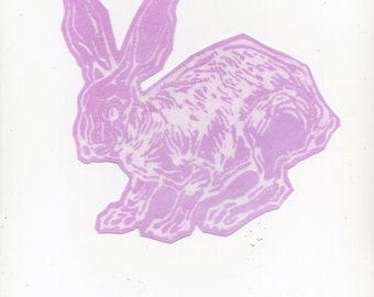 orchid pink bunny patch