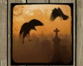 Hovering Crows, Graveyard, Ravens In Fog, Gothic Decor, Dark Orange, Corvidae, Otherworldly - Crows Legacy