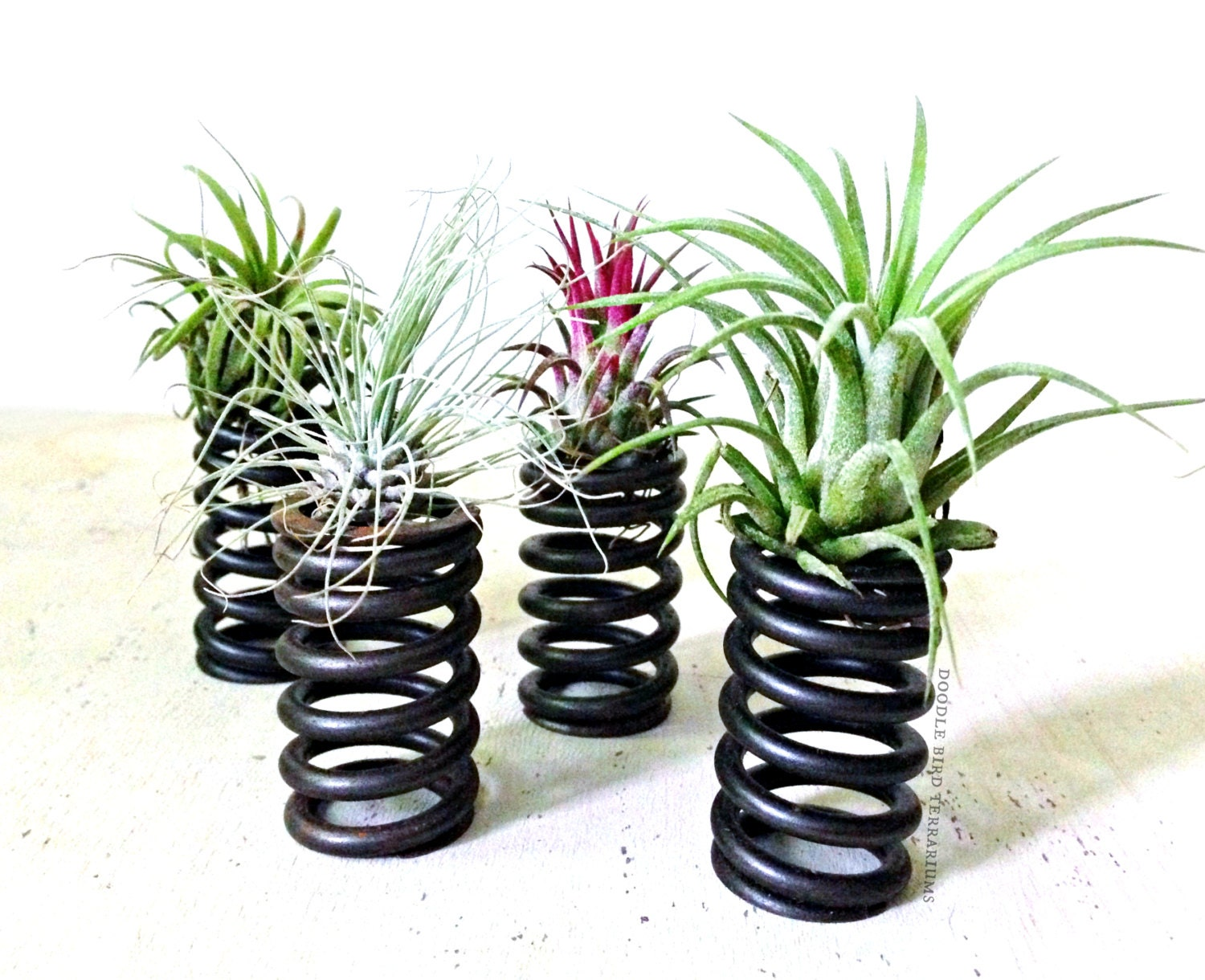 Tillandsia air plant mini recycled coil planters for Air plant planters