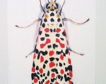 Moth -Big print -  red- white - art drawing print  animal drawing - ART PRINT size A3 -  Digital Prints & Reproductions