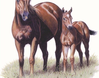 Limited Edition Print of Qtr Horse Mare and Colt - B Bruckner