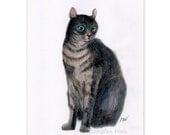 "colored pencil drawing cat art ""A Black Cat"" home decor wall art cat lover gift unique  (102)"