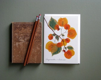 Apricot Bougainvillea pressed flower greeting card, Bougainvillea with green leaves, no.1188