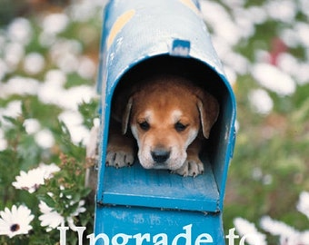 Priority Postage Upgrade - Domestic Shipping Only