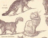 Beautiful Antique Print Encylopedia Plate Book Page 1920s Engraved Ilustrations Les chats French cats scrapbooking, collage