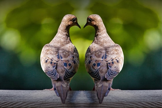 Love Dove Mourning Birds Romancing amidst the shape of a Valentine Heart No.1001 - A Fine Art Bird Photograph