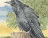 Raven 5x7 Print Matted 8x10