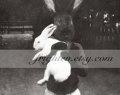 Rabbit Art Print, Black Bunny, Black and White Collage Art, Anthropomorphic