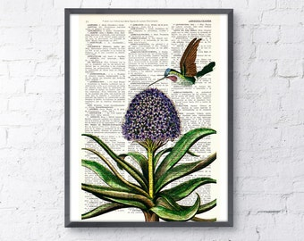 Hummingbird  Dictionary  book Page Upcycled Book Art Print Upcycled Book Print Vintage Hummingbird and hyacinth  print BPAN121