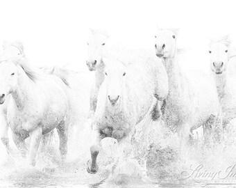High Key Water Run - Fine Art Horse Photograph - Horse