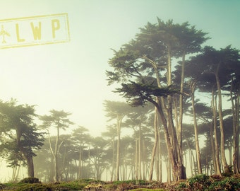 Coastal Fog, San Francisco, Forest Through the Fog, Dreamy California Coastal Landscape, 8x12 10x15 12x18 16x24 Fine Art Photograph