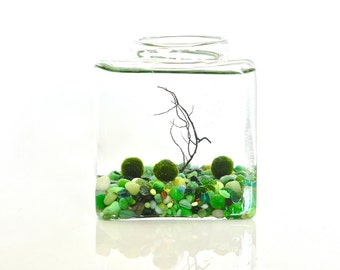 3 Marimo Moss Balls in Their Glass Cube Home with Forest Pebbles // Live Garden Kit, Forest Decor, Spring Decor, Green Forest Home Decor