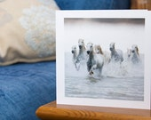 SUNRAYS, Camargue horses, Art Card, Horse Greeting card, Equine photography, Nautical Equine