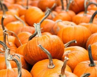 Pumpkins October November Thanksgiving Harvest Decor Pumpkins Orange Fall Autumn, Fine Art Print