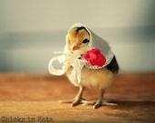 Photo Print 8x10 Chick Wearing A White Kerchief Photograph