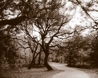 Minimalist Sepia Black and White Country Road and Trees Gallery Wrap Canvas - Fine Art Photograph Print Picture