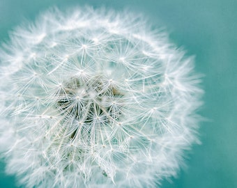 Flower Photography, Dandelion Puff Macro, Fine Art Photography Print, Teal, White Flower, Dreamy, Whimsical, Nursery Wall Art