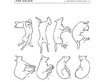 Kelpie Sleep Study Art Print. Illustrations of a dog's sleeping postions