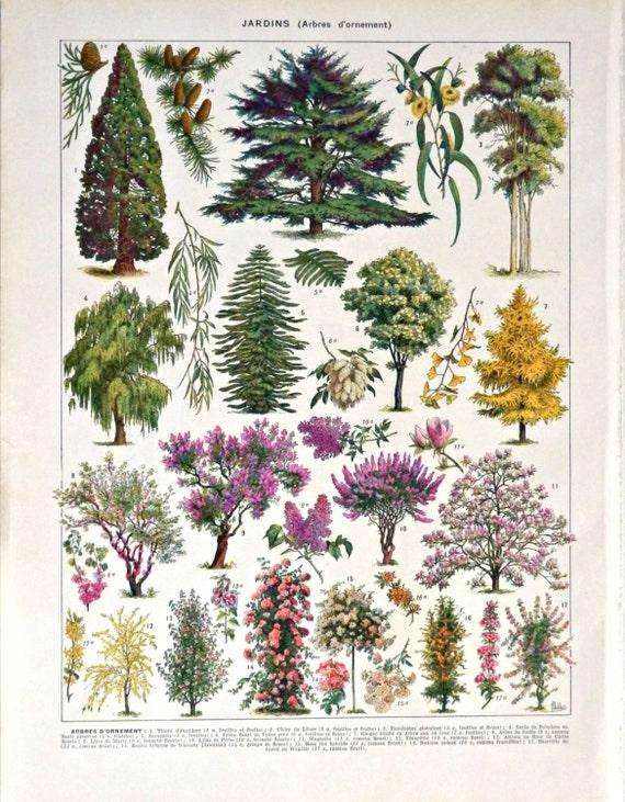 L mina vintage a os 20 39 arboles por castafioreoldprints en for Plantas forestales