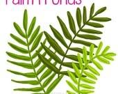 Palm Fronds Original Art, Set of 3 - 6 files total, palm frond clip art, beach clip art, palm printable