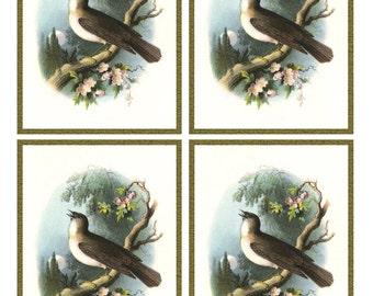 Vintage SINGING NIGHTENGALE BIRD Framed Image Sheet - Digital Instant Download - nature avian songbird ephemera print collage supply