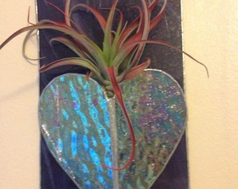 Airplant Heart Holder