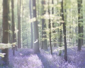Nature Photography - Bluebell Wood Landscape Photograph, Home Decor Fine Art Photograph, Large Wall Art