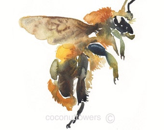 Bee print, Watercolor Print,Insect Art, large size, 11x14 inches, Honey Bee,Art Print