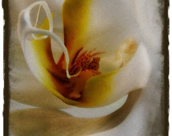 Abstract Flower Photo, Orchid Photo, Yellow Floral, Orange Flower, Abstract Floral Art, Limited Edition, abstract close up, orchid photo art