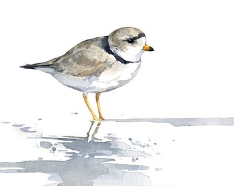 Piping Plover watercolor print, sandpiper, beach, painting