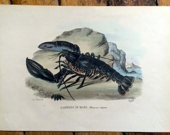 1863 LOBSTER CRUSTACEAN print rare original antique ocean sea life print -gambero di mare - homarus vulgaris