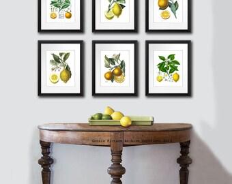 Kitchen Art Decor, Citrus Prints Set. Orange print Lemon print,Fruit Wall Art Set of 6 Botanical Prints Kitchen Wall Art