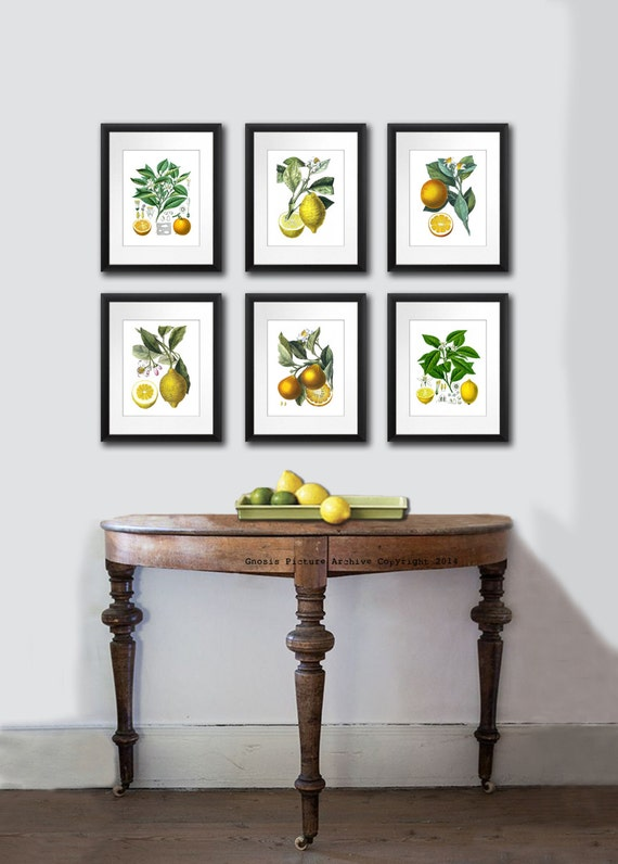 Botanical citrus prints