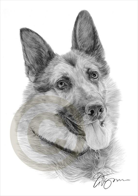 Crayon de berger allemand alsacienne de chien dessin imprimer - Dessin de chien berger allemand ...