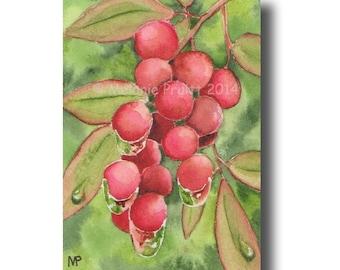 ACEO Nandina Berry ORIGINAL dewdrop dew waterdrop painting by Melanie Pruitt SFA
