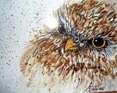 Post card from original paintings - Owl, Fish, Blue Iris, Blue Bird