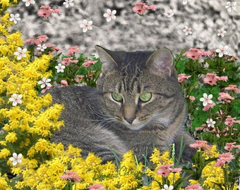 Mimosa the Tiger Cat in Mimosa Flowers - ACEO, Art Card