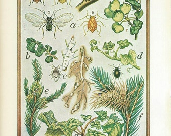 Vintage Book Plate - Aphids / Bean Aphid / double sided / Insects / Garden Pests