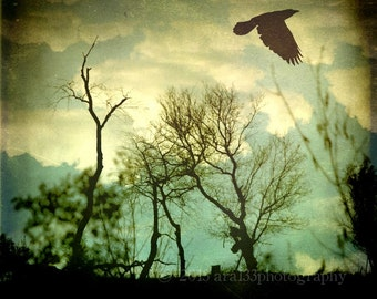 CLEARANCE Nature Photograph, Bird Photo, Crow, Trees, Clouds, Dark, Blue, Fence, Silhouette, 8x8 inch Fine Art Print